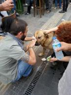 occupyGezi (223)